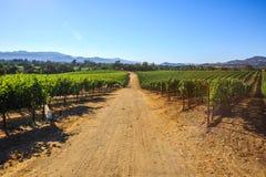 Grape plantation of Napa valley Royalty Free Stock Image