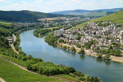 Grape plantation on the river Moezel in Germany Royalty Free Stock Image