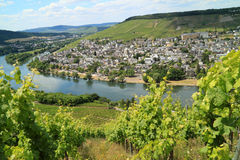 Grape plantation on the river Moezel in Germany. The Moezel river and Old Small city Bernkastel Kues in Germany Stock Photos