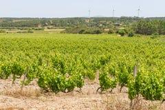 Grape plantation and wind farm Royalty Free Stock Photography