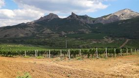 Grape plantations in Crimea mountains stock video