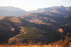 Grape plantations of high mountains Royalty Free Stock Photo