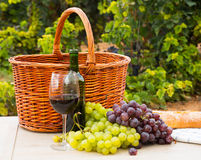 Grape plants and vine Royalty Free Stock Photo