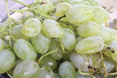 Sweet grains grape from bulgaria royalty free stock images