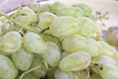 Sweet grains grape for wine royalty free stock photo