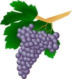 Grape, Produce, Fruit, Food Royalty Free Stock Image