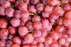 Grape in red Royalty Free Stock Images