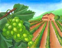 Grape and rural landscape. Grape and vineyard in a rural landscape. Wine label illustration royalty free illustration