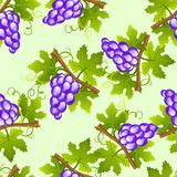 Grape seamless pattern Royalty Free Stock Photos