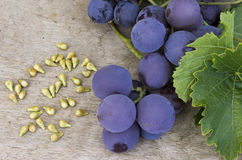 Grape Seed Royalty Free Stock Photo