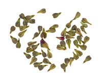 Grape seeds Stock Photography