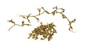Grape seeds and stems Stock Photos