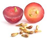 Grape seeds on white background macro closeup Royalty Free Stock Image