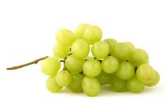 Grape single Stock Image