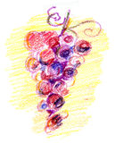 Grape sketch. Red grape sketch on yellow background Stock Photography