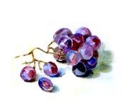Grape sketch Stock Image