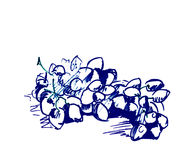 Grape sketch Royalty Free Stock Image