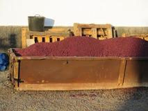 Grape Skins Royalty Free Stock Image