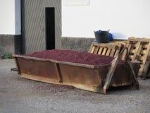 Grape Skins Stock Image