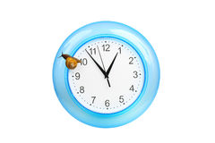 Grape snail climbing on a clock Stock Photos