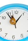 Grape snail climbing on a clock Royalty Free Stock Photo