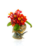 Grape snail in flowers Royalty Free Stock Photo
