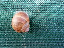 Grape snail on Green plastic sunprotector fence stock photo