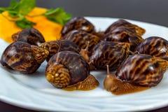 Grape snails, akhatina, on a plate, as crude food, a rawism stock image