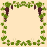 Grape square frame Royalty Free Stock Photos