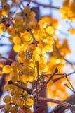 Grape and sun Stock Photo