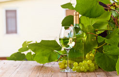 Grape and sweet wine in vineyard Royalty Free Stock Photography