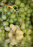 Grape to backgrounds Royalty Free Stock Photos