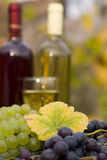 From grape to wine Stock Photos