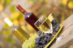 From grape to wine. A still life composition with grape and wine Royalty Free Stock Photography