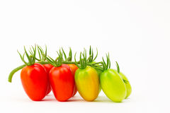 Grape tomatoes ripening on stem Stock Images