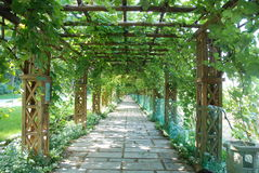 Grape trellis Royalty Free Stock Images