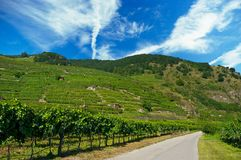 Grape valley Stock Image