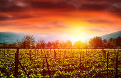 Grape valley in sunset Royalty Free Stock Photography