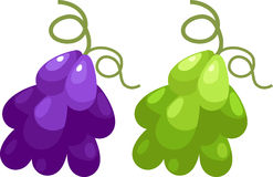 Grape vector. Grape isolated illustration on white background vector Stock Photography