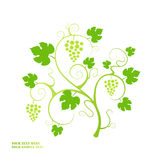 Grape vine. Stock Images