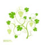 Grape vine. Stock Images