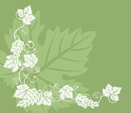 Grape vine. A grape vine design element royalty free illustration