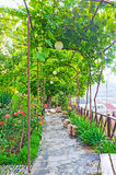 Grape vine arch in Kldisubani district of Tbilisi Stock Photos