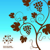 Grape vine background. Royalty Free Stock Image