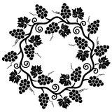 Grape vine, vector Stock Photography
