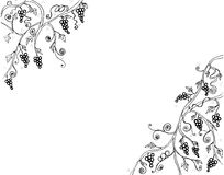 Grape Vine and Branch Illustration line art black and white drawing  Stock Photography
