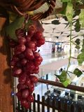 grape or vine can grow anywhere these days.. outdoor or indoor including shopping mall. royalty free stock photos