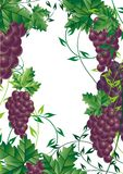 Grape vine design element for vector illustration