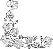 Grape vine design element Stock Image