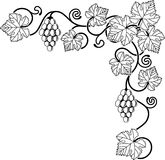 Grape vine design element Stock Photos